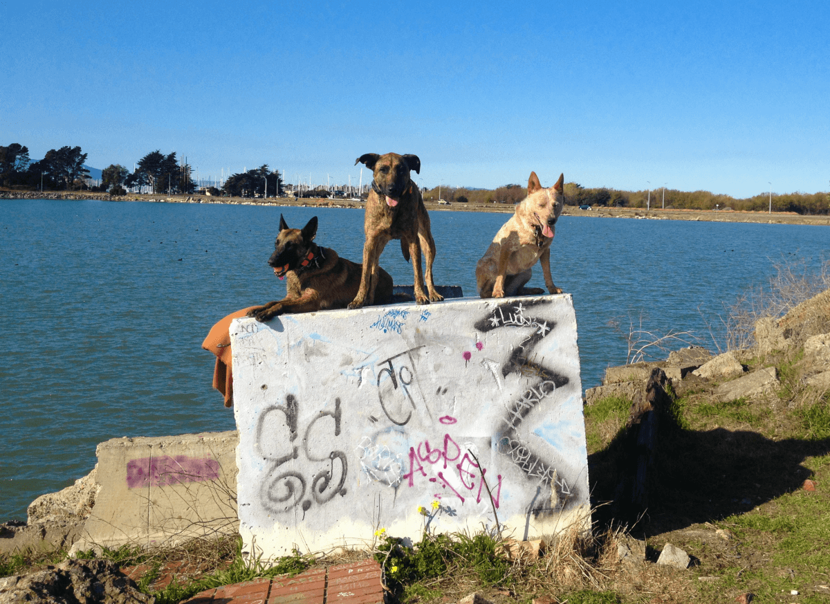 Dogs on a graffiti wall, TheBalancedK9.com
